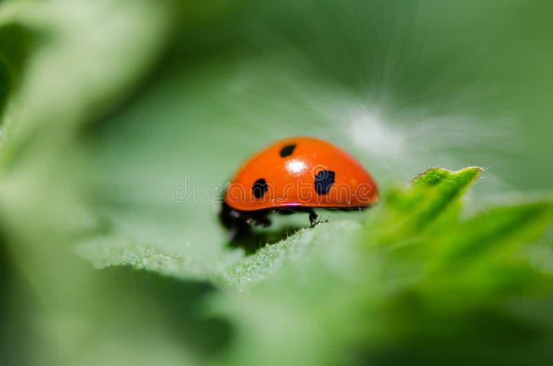 Animal, Photography, Blur stock photos