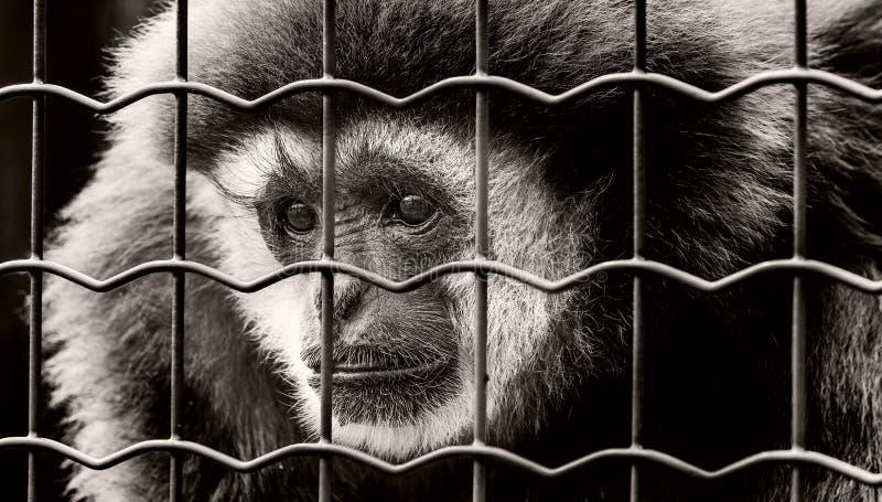 Animal, Photography, Portrait royalty free stock photos
