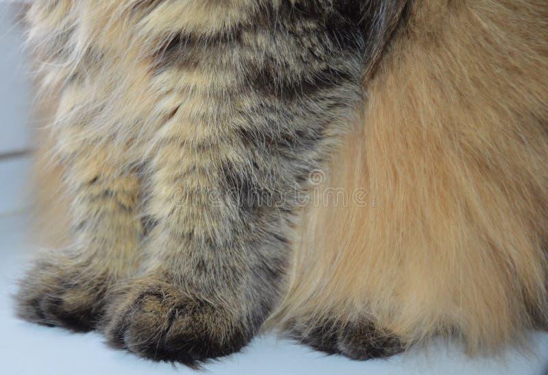 Animal, piel, gato, animal doméstico, mamífero, textura, blanco, pelo, piel, zorro, lindo, gatito, naturaleza, perro, lana, felin foto de archivo
