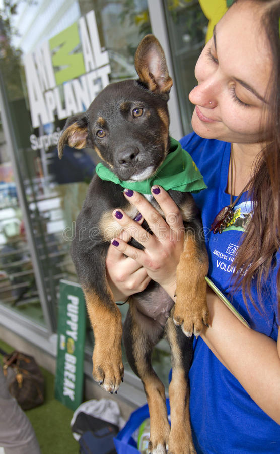 Animal Planet Puppy Bowl Pet Adoption. Downtown Phoenix celebrated hosting Super Bowl XLIX and Pro Bowl with many special NFL football fan attractions to see and stock images