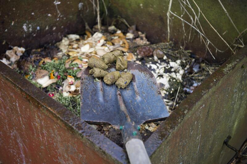 Animal poo in compost. Animal poo on a shovel next to compost, outdoor closeup royalty free stock images
