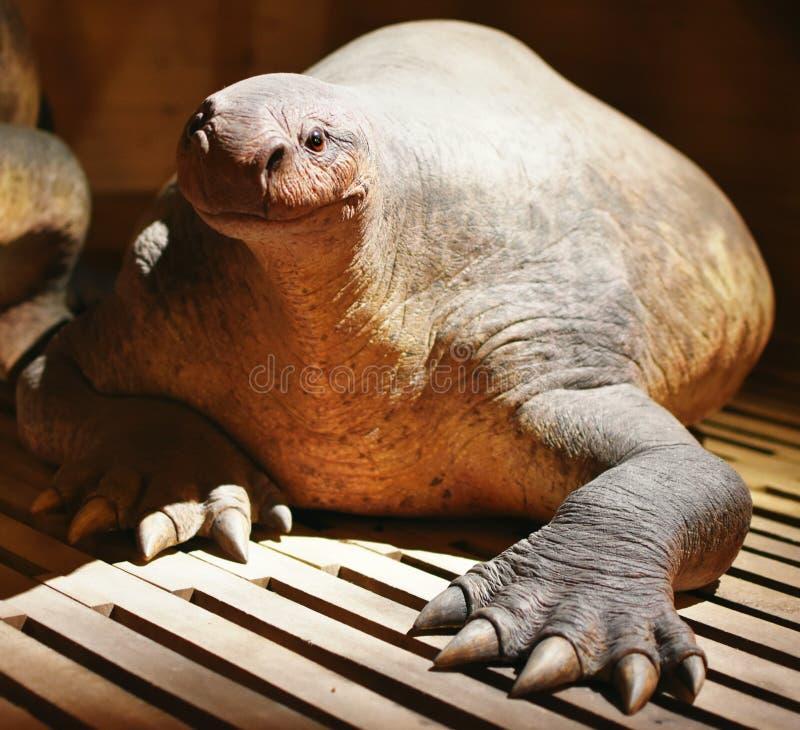 Animal préhistorique - la rencontre d'arche images libres de droits