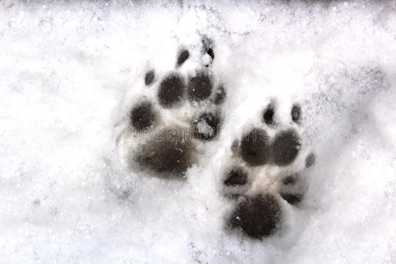 Animal Prints in the Snow stock photography