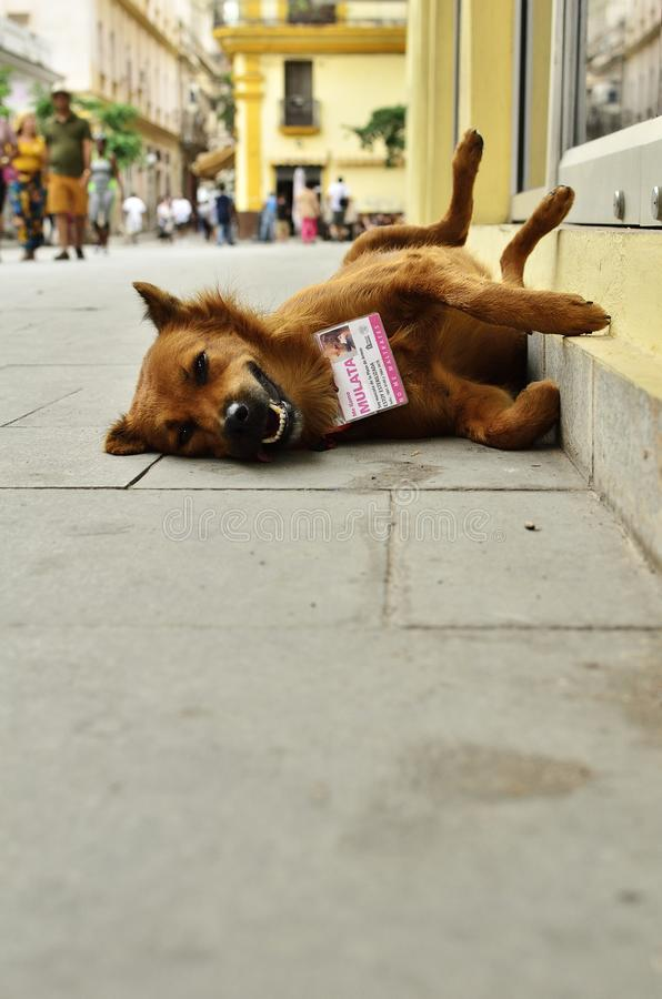 Animal protection Cuba II royalty free stock photo