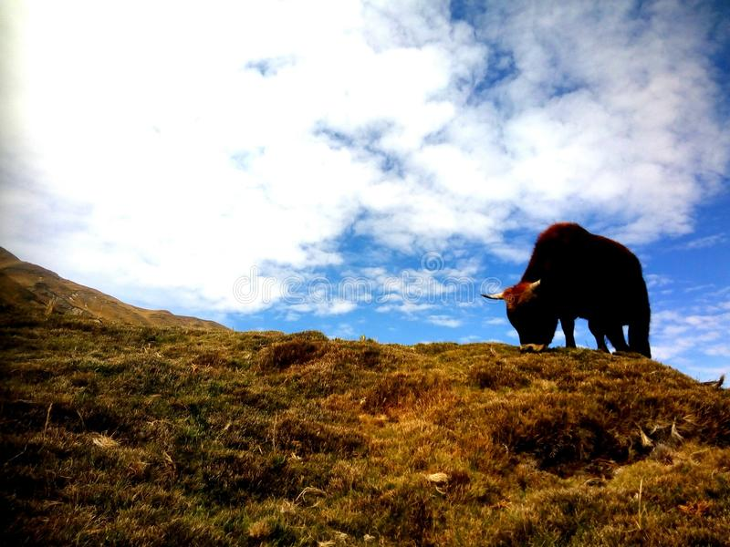 Animal que come na paisagem bonita fotos de stock royalty free