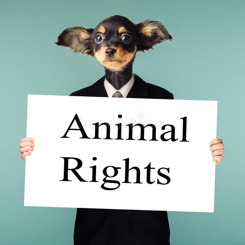 Animal rights concept. Collage combining businessman and dog head. The character stands on a blue background and holds in his royalty free stock photos