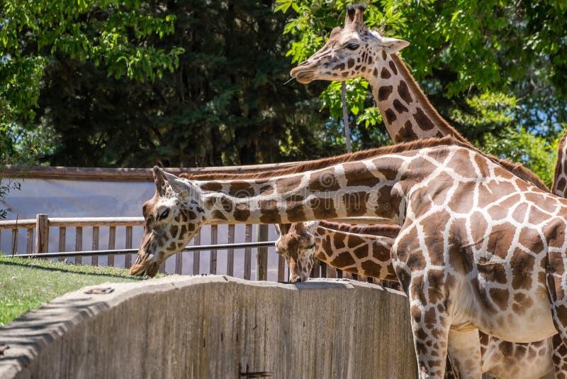 Animal salvaje fotografía de archivo libre de regalías
