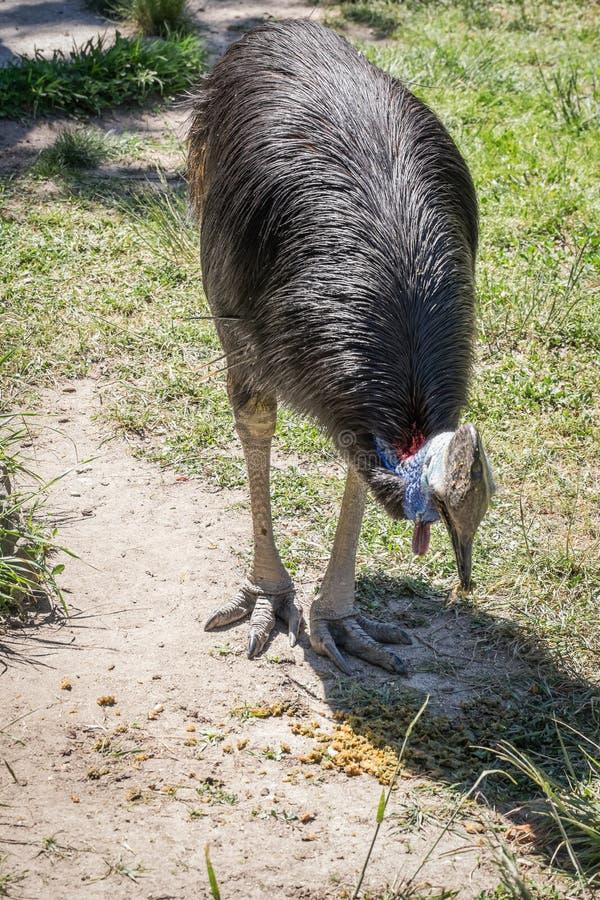 Animal salvaje fotos de archivo