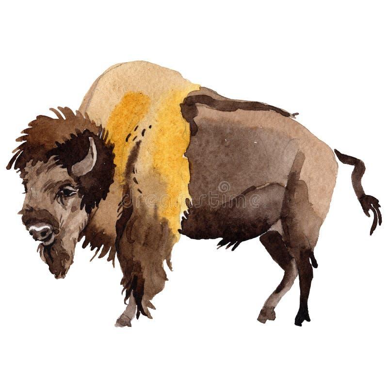 Animal sauvage de bison exotique dans un style d'aquarelle d'isolement illustration stock