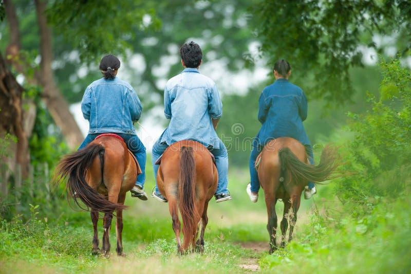 Animal Science studying on horseback. Thai Horse. Horse whisperer. Garden background. Animal Husbandry at Kasetsart University, K stock photo