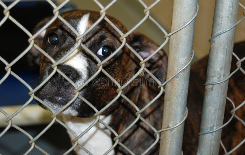 Animal Shelter Puppy Stock Photo
