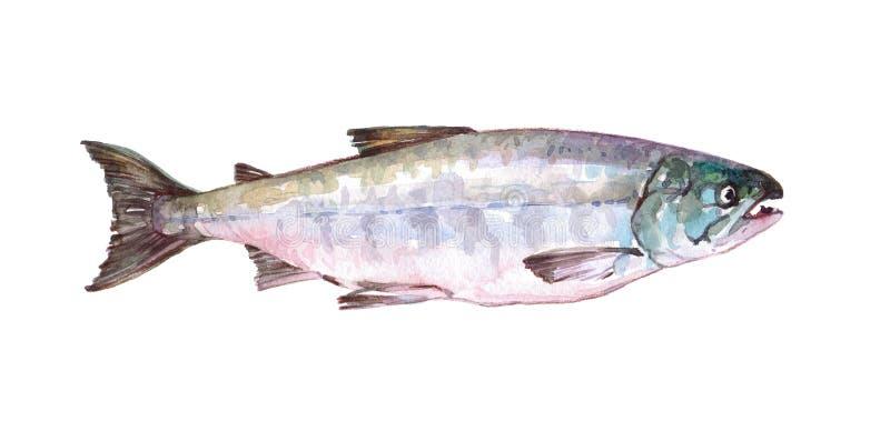 Animal simple de poissons de copain d'aquarelle d'isolement illustration de vecteur