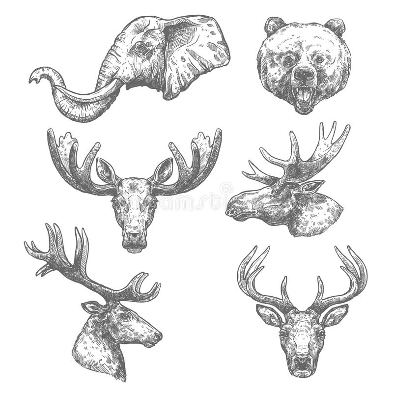 Animal sketch set of african and forest mammal. Animal isolated sketch set of african and forest mammal animal. Elephant, bear, deer, grizzly, elk, reindeer stock illustration