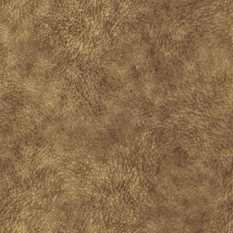 Download Animal Skin stock image. Image of rhinoceros, texture - 20199217