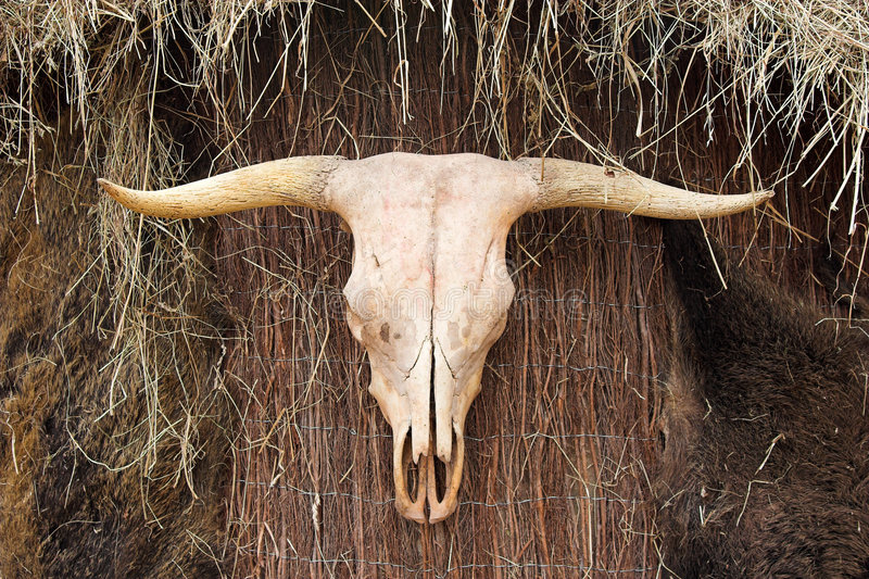 Download Animal skull stock photo. Image of symbol, house, totem - 1493532