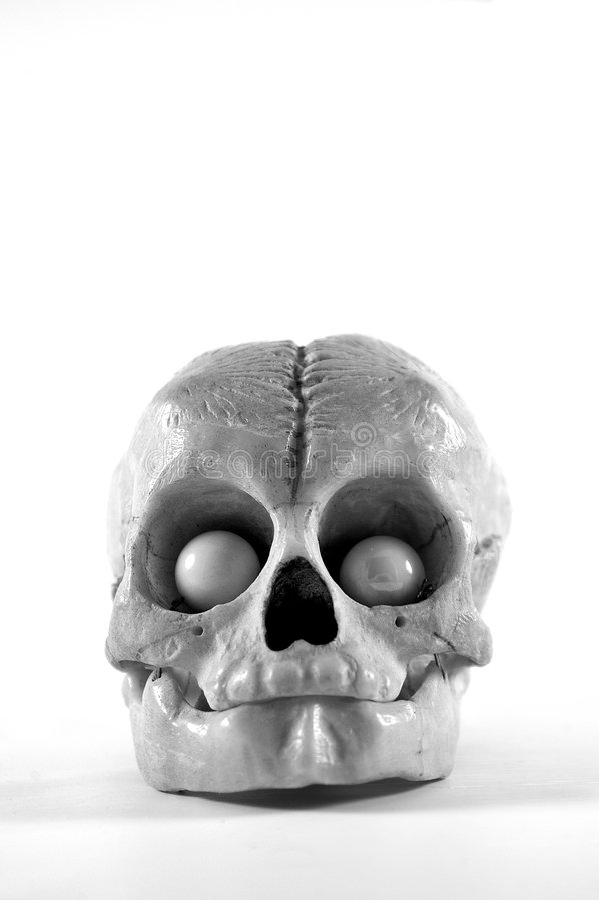 Free Animal Skull Royalty Free Stock Photography - 88697