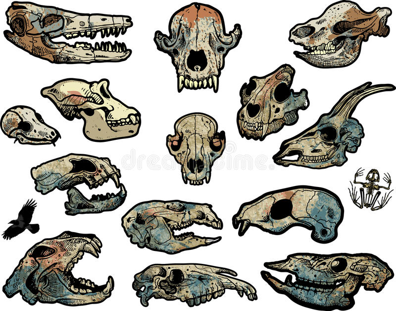 Animal skulls stock illustration