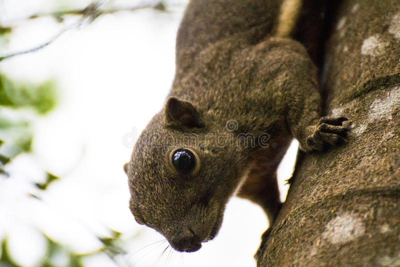 Animal squirrel tree evening head royalty free stock images