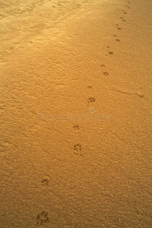 Download Animal traces stock photo. Image of wildlife, track, footprint - 14059234