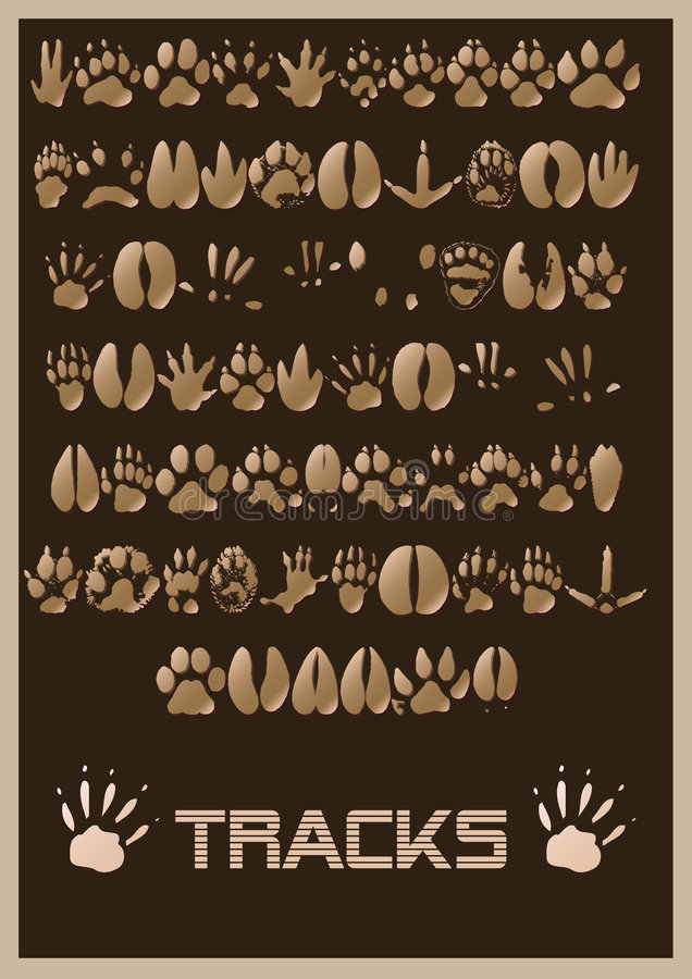 Download Animal tracks stock illustration. Image of opossum, animal - 7437876