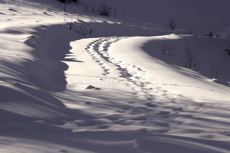 Animal tracks on road. Full of snow stock photo