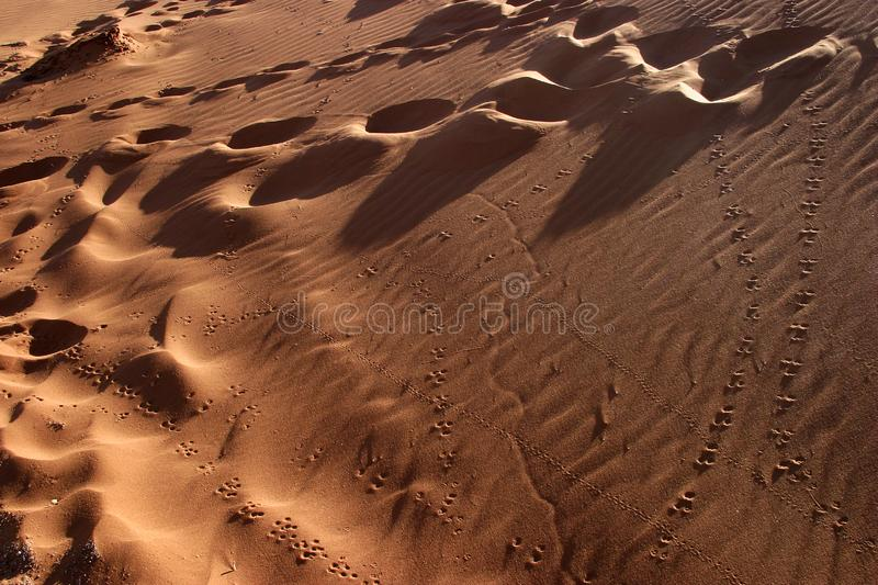 Download Animal tracks in the sand stock image. Image of footprint - 18228847