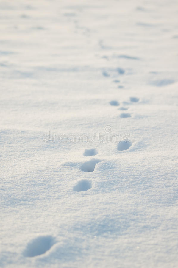 Download Animal Tracks In Snow Royalty Free Stock Images - Image: 12432879