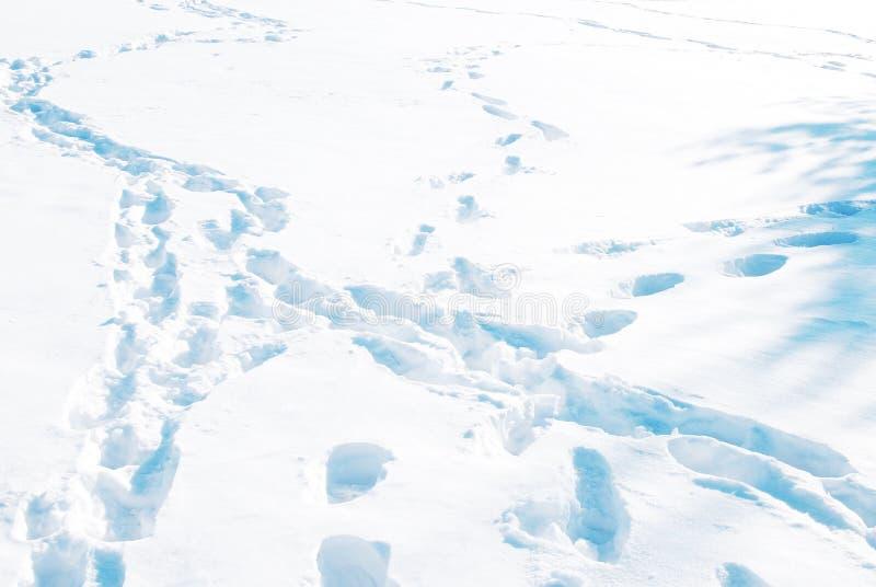 Animal Tracks in Snow. Closeup Animal Tracks in Snow royalty free stock photos