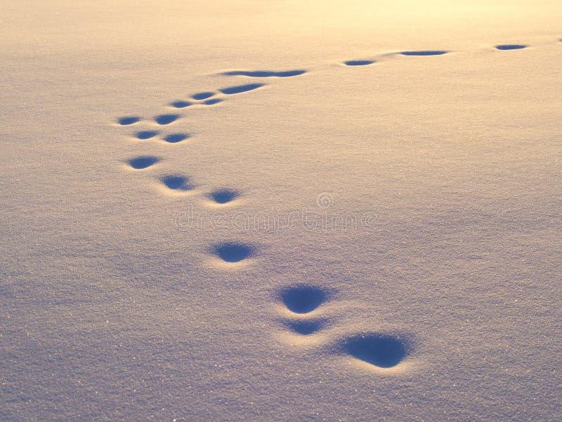 Animal tracks in snow royalty free stock photos