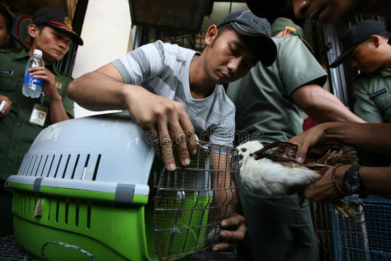 Animal traded. Conservation officers confiscated endangered species of animals which are traded in the market town of Solo, Central Java, Indonesia royalty free stock photo