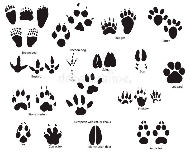 Download Animal trails with title stock vector. Image of cartoon - 10476124