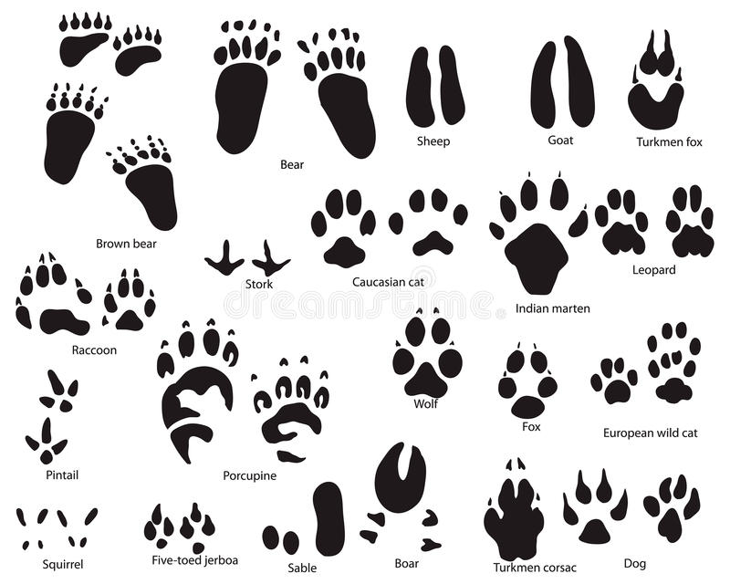 Animal Trails With Title Royalty Free Stock Photos