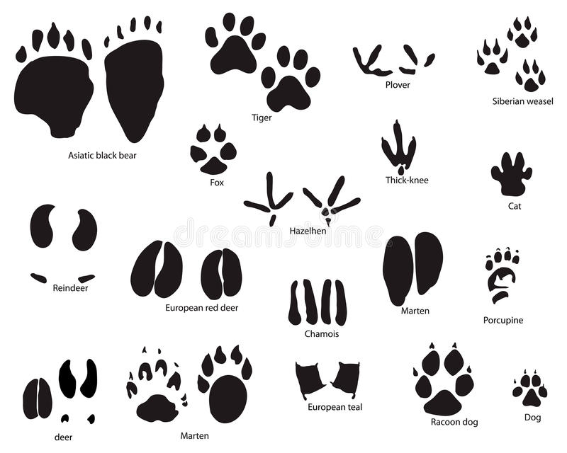 Download Animal trails with title stock vector. Image of background - 10476131