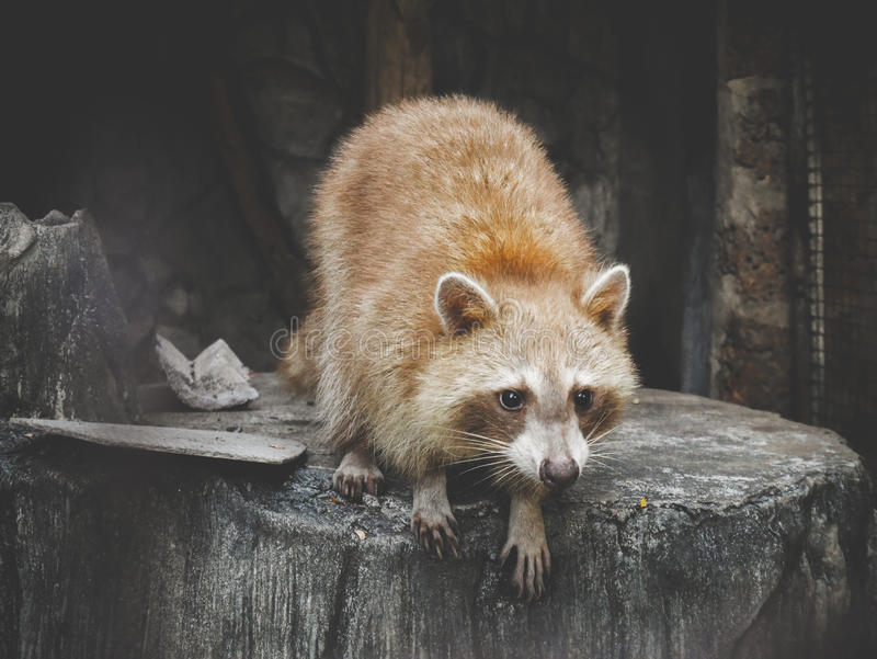 Animal stock photography