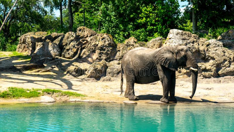 Animal watering hole. Elephant relaxing by the watering hole stock images
