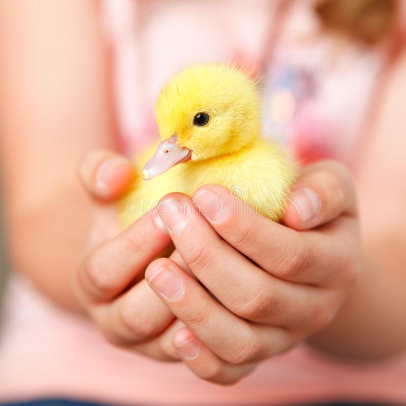 Animal welfare royalty free stock images