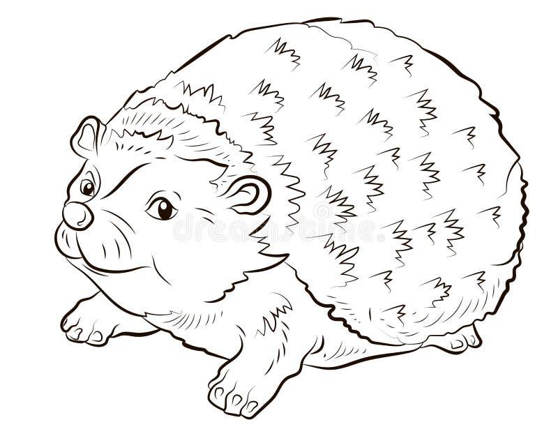 Hedgehog Coloring Book Stock Illustrations – 699 Hedgehog Coloring Book  Stock Illustrations, Vectors & Clipart - Dreamstime