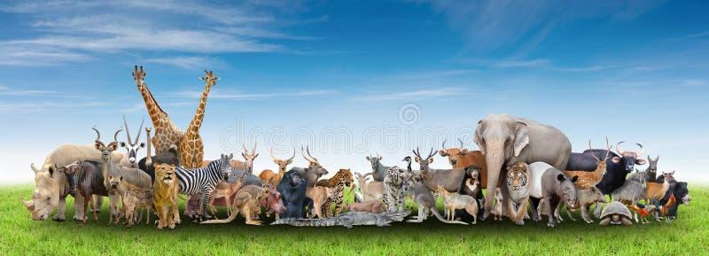 Animal of the world royalty free stock photo