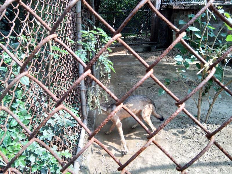 animale fotografia stock libera da diritti