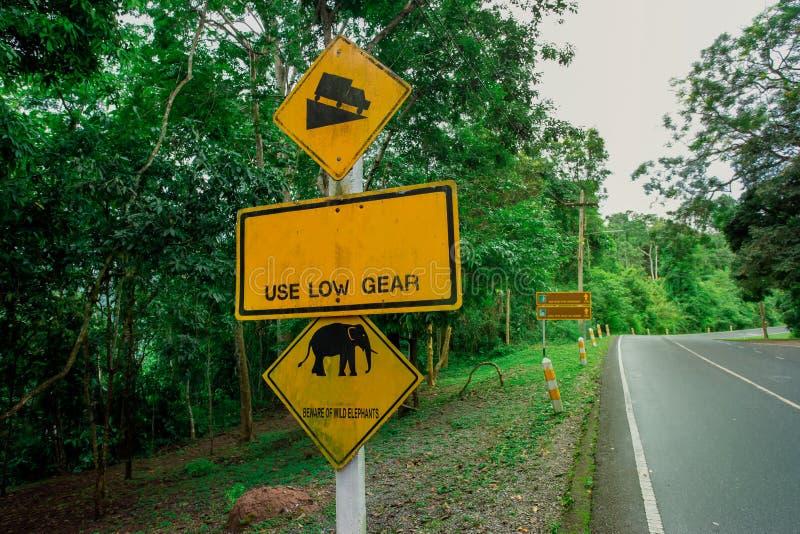 Animale, Asia, elefante, elefante indiano, mammifero immagini stock