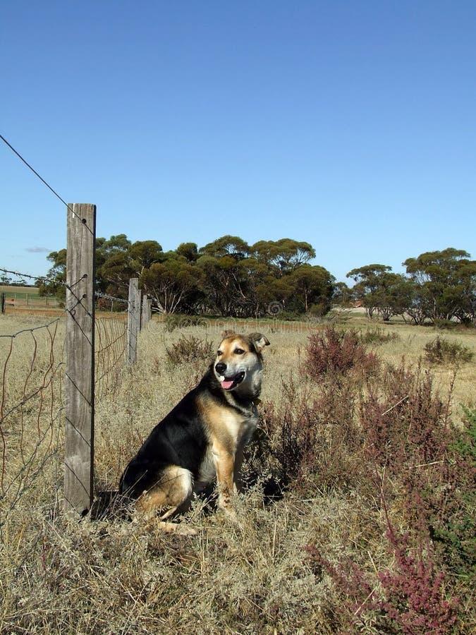 Animale - cane dell'azienda agricola fotografia stock libera da diritti