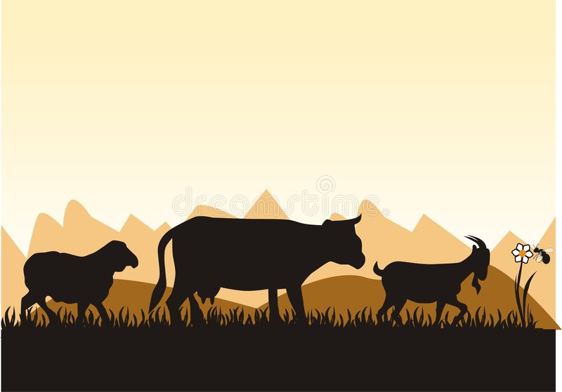 Animale da allevamento