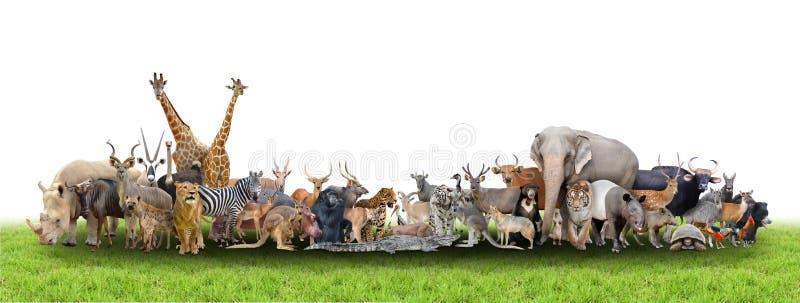 Animale del mondo immagine stock libera da diritti