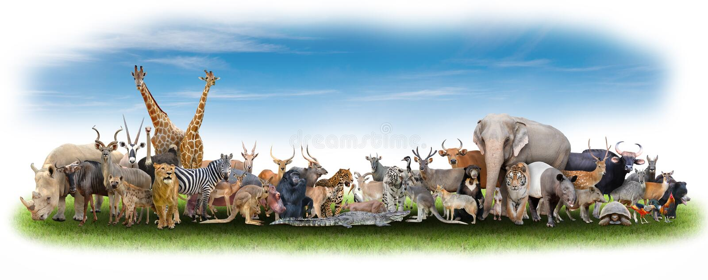 Animale del mondo immagini stock libere da diritti