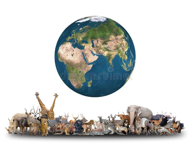 Animale del mondo con pianeta Terra fotografie stock libere da diritti