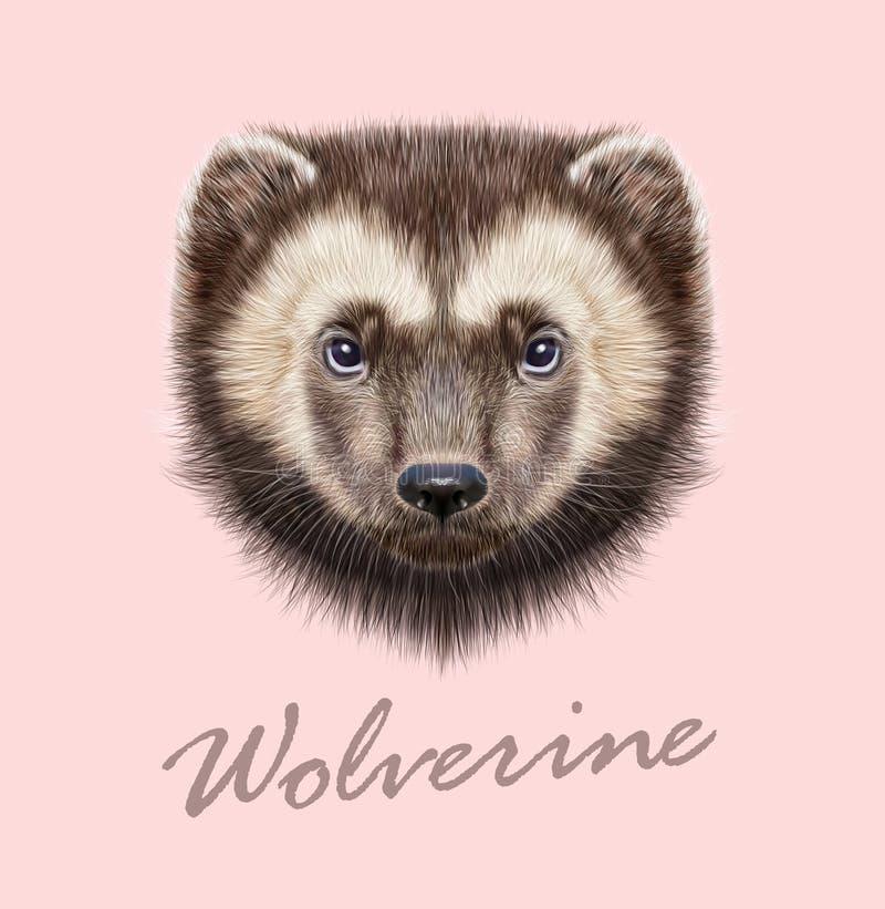 Animale di Wolverine Ritratto illustrato vettore fotografia stock