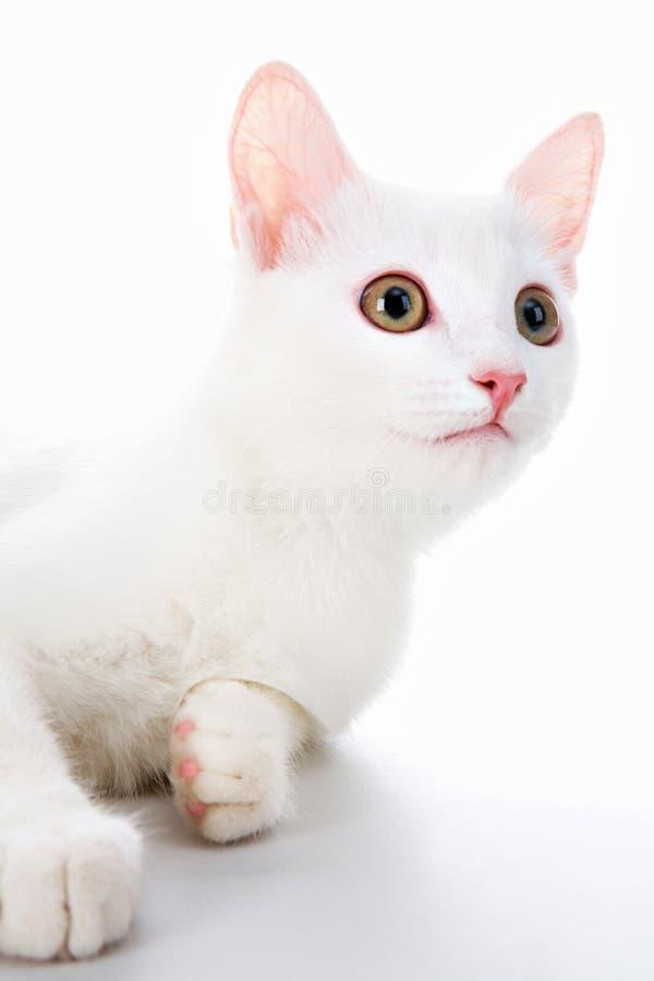 Animale domestico bianco immagini stock
