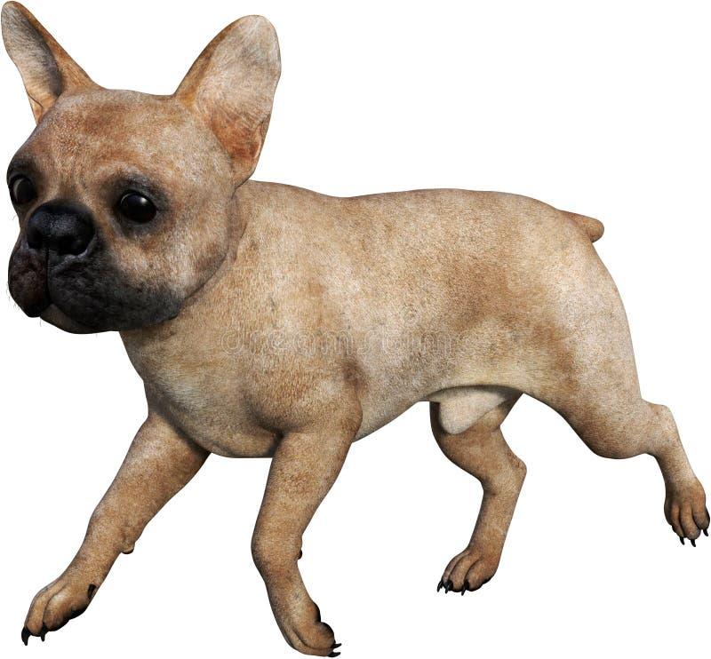 Animale domestico del bulldog che cammina, isolato royalty illustrazione gratis