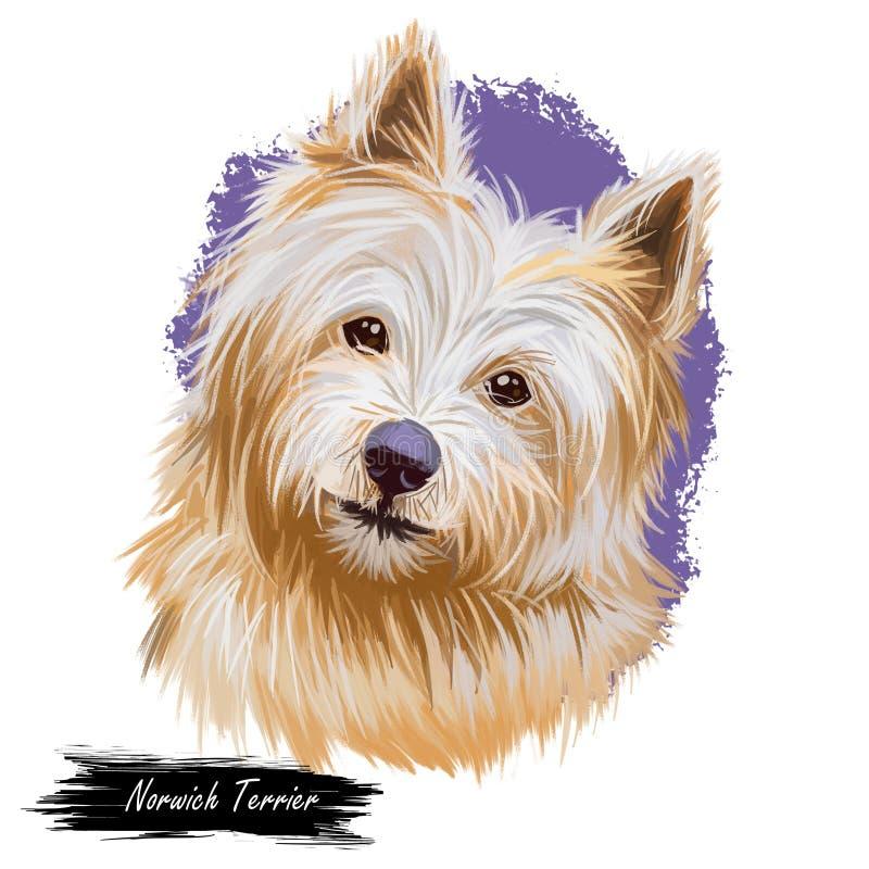 Animale domestico del terrier di Norwich con arte digitale della museruola gentile e della pelliccia lunga Familiaris di canis lu illustrazione vettoriale