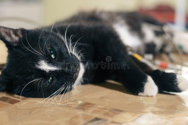Animale domestico del veterinario Il pavimento è nero fotografie stock libere da diritti